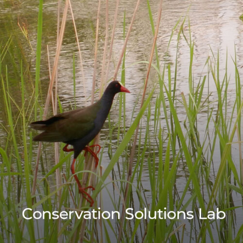The Conservation Solutions Lab convenes scientists, conservationists, and development practitioners to assess and apply evidence-based practices to designing, implementing, and evaluating community engagement approaches in conservation.